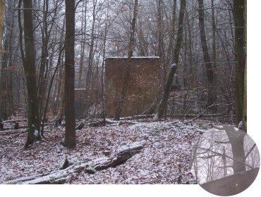 walls-in-the-woods.jpg