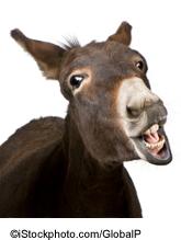 A donkey - ©iStockphoto.com/GlobalP