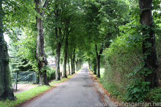 A leafy avenue from the car park to the market square in Bergen auf Rügen