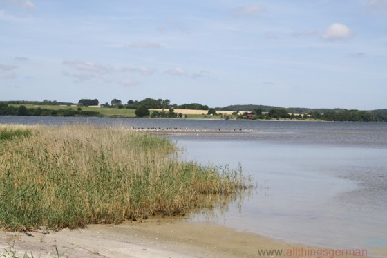 The channel between Vilm and Rügen is only 30cm deep at some points, allowing wild pigs to cross