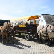 Horse-drawn carriages in Neuendorf