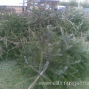 A collection of Christmas trees