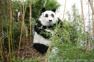 The panda in the tropical zone at the Hessentag in Oberursel