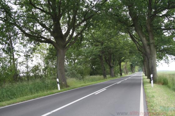Deutsche Alleenstraße - near Kluis on Rügen