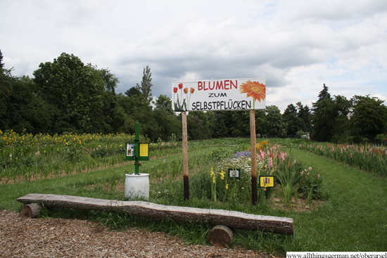 Pick your own flowers in Bommersheim
