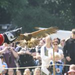 8th Oberursel Feyerey - 6th August, 2016 (Birds of Prey)