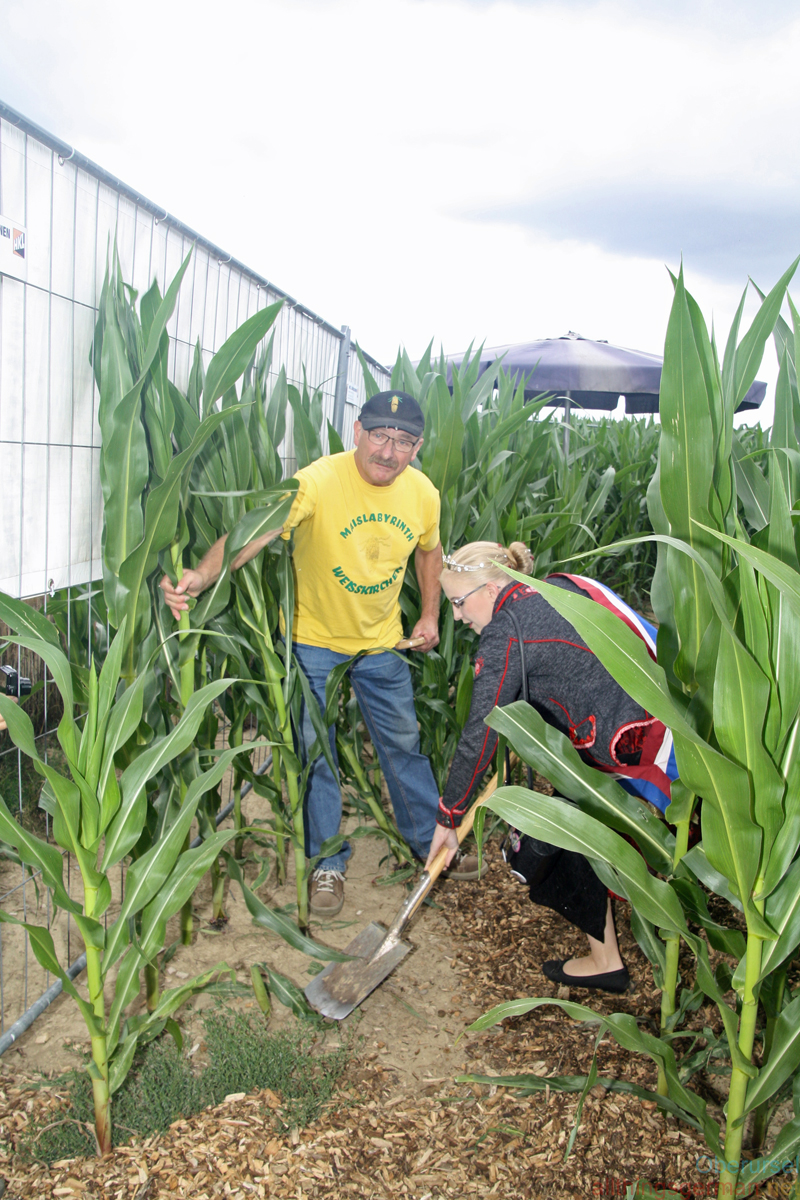 Fountain Queen Ann-Kathrin I. removing the last maize plants with owner Richard Bickert